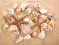 Sea shells with sand as background Stock Photo