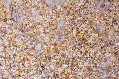Sea shells on sand as background stock photos