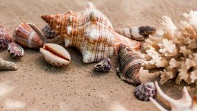 Sea shells with sand as background. Summer beach. stock video footage