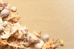 Sea shells with sand as background. Stock Photo