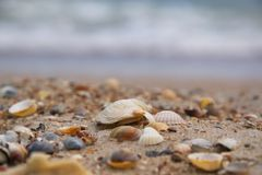 Sea shells in the sand on the background of the sea stock photography
