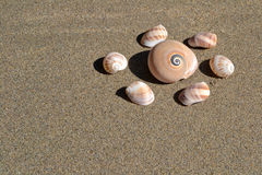 Sea shells on the sand in the beach. Sea shells on the sand in a summer day Royalty Free Stock Image