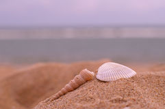Sea shells and beach Stock Photography