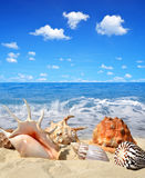 Sea shells in sand Royalty Free Stock Images
