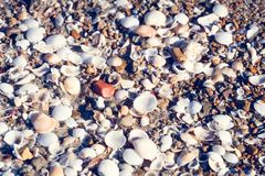 Sea shells on sand of the beach as background royalty free stock photo