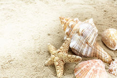 Sea shells in the sand on the beach, concept for summer holiday Royalty Free Stock Photos