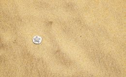Sea shells on sand beach. In summer stock image