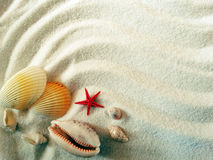 Sea shells on sand beach summer beach background Stock Photography