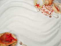Sea shells on sand beach summer beach background Stock Photo