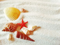 Sea shells on sand beach summer beach background Stock Photos