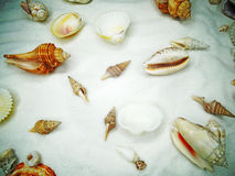 Sea shells on sand beach summer holiday background Stock Image