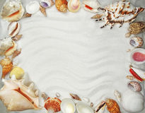 Sea shells on sand beach summer holiday background Royalty Free Stock Photography
