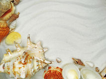 Sea shells on sand beach summer holiday background Stock Photography