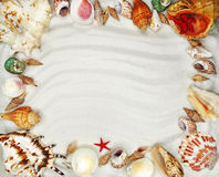 Sea shells on sand beach summer holiday background Royalty Free Stock Photo