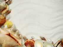 Sea shells on sand beach summer holiday background Royalty Free Stock Images
