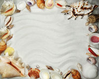 Sea shells on sand beach summer holiday background Royalty Free Stock Image