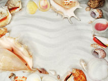 Sea shells on sand beach summer holiday background Stock Images