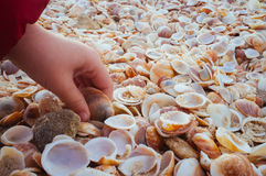 Sea Shells in the sand#6. A close up of natural pile of sea shells with sand in the and a child's hand is picking one shell Stock Photography