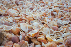 Sea Shells in the sand. A close up of natural pile of sea shells with sand in them. Great for wall papers and backgrounds Royalty Free Stock Images