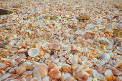 Sea Shells in the sand#4. A close up of natural pile of sea shells with sand in them. Great for wall papers and backgrounds Royalty Free Stock Photo