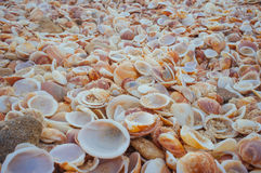 Sea Shells in the sand#7. A close up of natural pile of sea shells with sand in them. Great for wall papers and backgrounds Royalty Free Stock Image