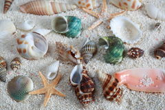 Sea Shells on Sand Stock Image