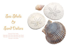 Sea Shells and Sand Dollars isolated on white background. Sea Shells and Sand Dollars isolated on white with easy to remove sample text. Copy space included royalty free stock photos
