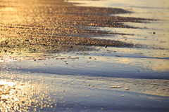 Sea shells on sand during golden sunset. Royalty Free Stock Photography
