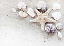 Sea Shells on Sand Horizontal Border. Beautiful Sea Shells on White Sand Horizontal Border royalty free stock photos