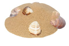 Sea shells with sand isolated on white Stock Photos