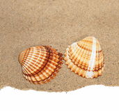 Sea shells with sand isolated on white Royalty Free Stock Photo