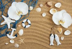 Sea shells with sand and orchid flowers. Sea shells with  orchid flowers on a sand  background Royalty Free Stock Photography