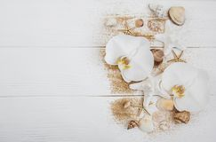 Sea shells with sand and orchid flowers. On a white wooden background Stock Photos