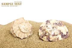 Sea shells on sand over white background Royalty Free Stock Image