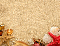 Sea shells on the sand. Postcard with copyspace. Stock Photography