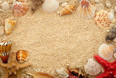 Sea shells on the sand. Postcard with copyspace. Space for text Stock Image