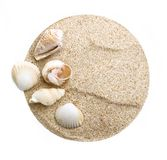 Sea shells on sand. Royalty Free Stock Images