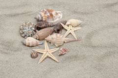 Sea shells with sand Stock Images