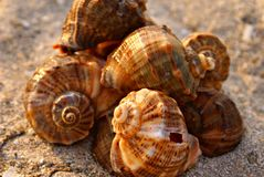 Sea shells on the sand Royalty Free Stock Images