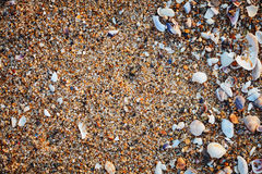Sea shells on sand. Royalty Free Stock Photos