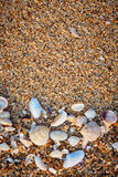 Sea shells on sand. Stock Photos