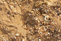 Sea shells on sand Royalty Free Stock Image