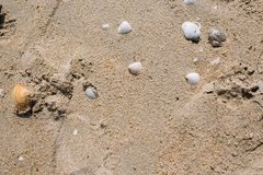 Sea shells on sand. Summer beach background. royalty free stock photo