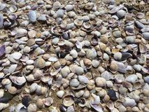 Sea shells on sand. Summer beach background Royalty Free Stock Images