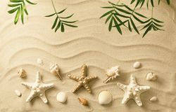 Sea shells on sand. Summer beach background Stock Image