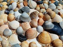 Sea shells on sand. Summer beach background. stock images