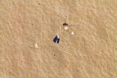 Sea shells on sand. Summer beach background. Royalty Free Stock Photo