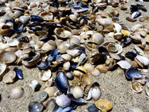 Sea shells on sand. Summer beach background. Top view Royalty Free Stock Photos