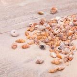 Sea shells on sand. Summer beach background Stock Photos