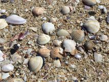 Sea shells on sand. Summer beach background Royalty Free Stock Image